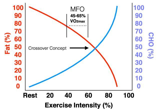 metabolismo chetogenico
