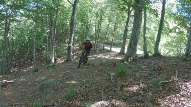 Camasca Trail - bosco