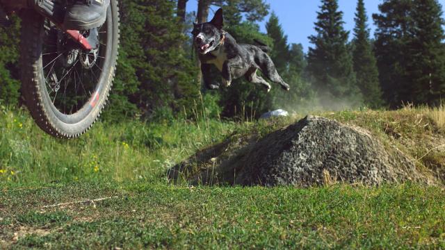 Luna The Trail Dog - action