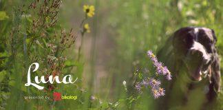 Luna The Trail Dog - video cover