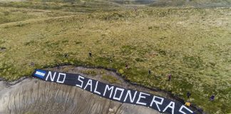 argentina salmoni