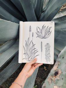 *herbarium