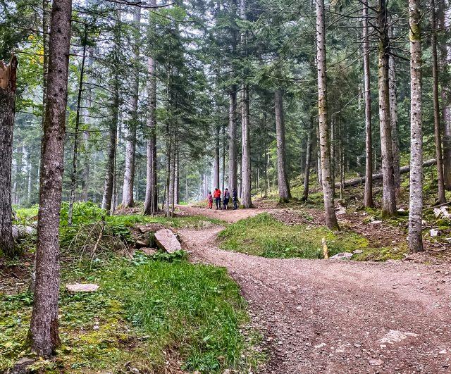 MTB Talks Dolomiti Paganella Bike - curve strette
